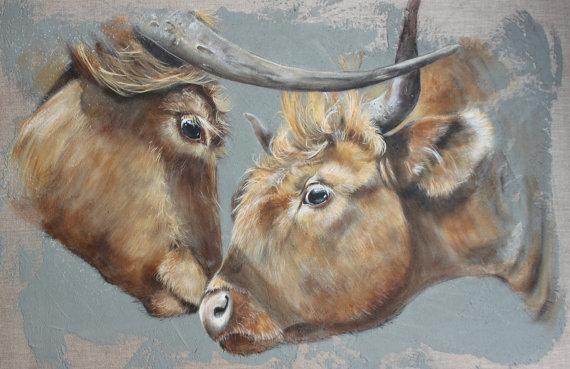 Vaches Highland - Nez à nez du Platier