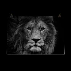 Affiche d'art Poster papier mat – Lion