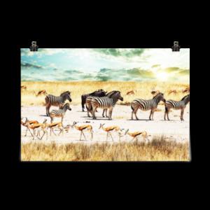 Affiche d'art poster – Zèbres – Afrique